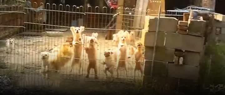 触目惊心!央视曝光如皋地下宠物交易市场