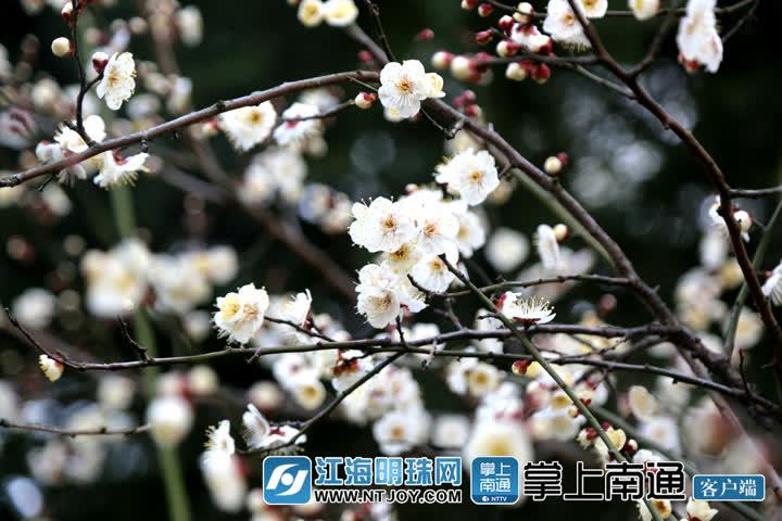 5B2A3888_副本.jpg